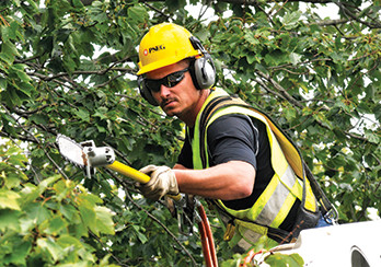 Utility worker trimming tree branches