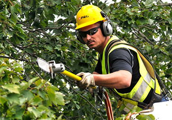 PSE&G worker trimming tree near power lines
