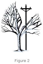 Diagram of tree that has been pruned with directional pruning techniques to avoid contact with power line